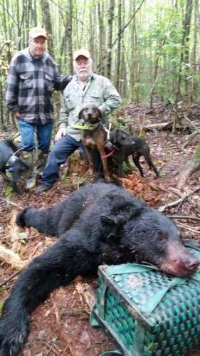 Black bear hunts in Maine
