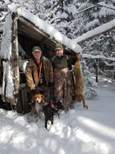 Guided bobcat hunt Maine