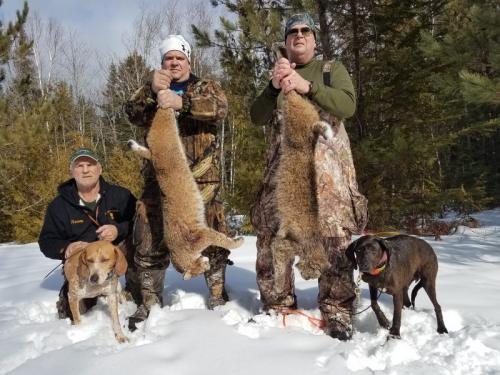 Guided bobcat hunt Maine