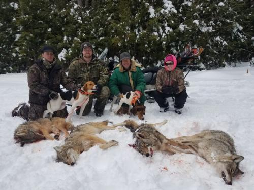 Coyote hunt in Maine