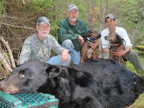Maine blackbear guide services
