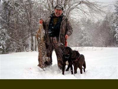 Maine guided  bobcat hunt