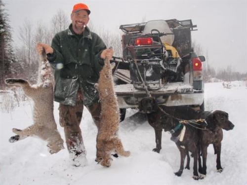 Maine guided bobcat hunting