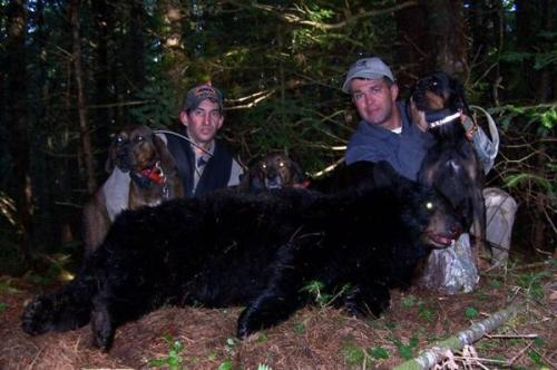 Maine blackbear hunts