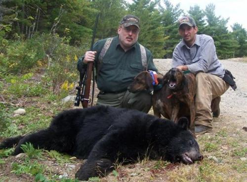 Maine bear hunts