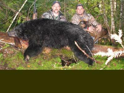 Bear hunt with hounds in Maine