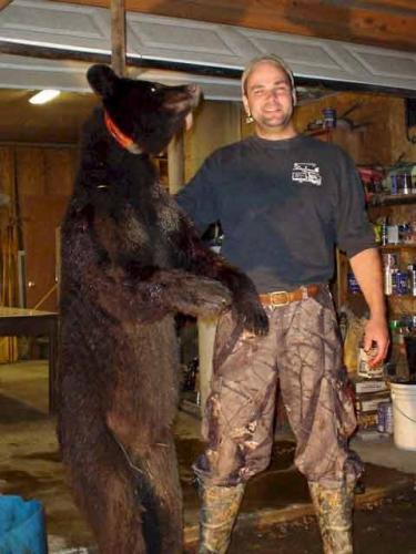 Maine guided black bear hunting