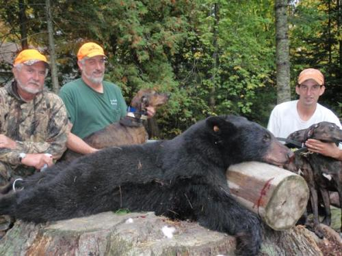 Maine guided blackbear hunts