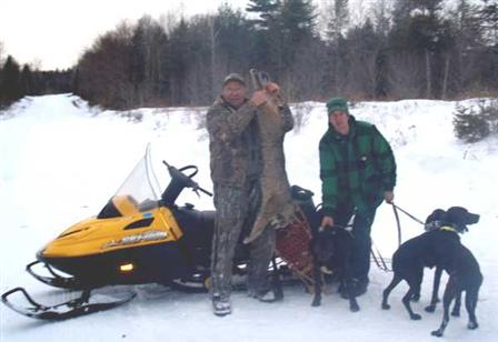 Bobcat hunting in Maine