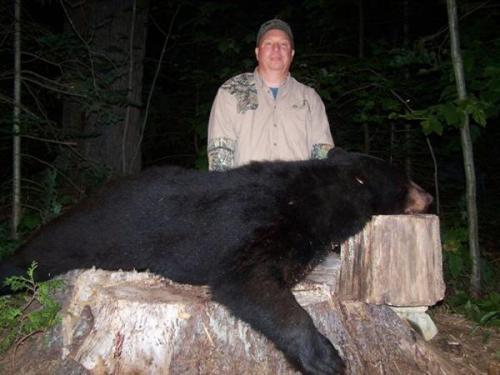 Maine bear hunts