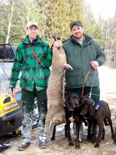 Bobcat hunts in Maine