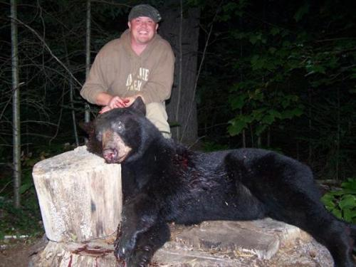 Maine bear hunting