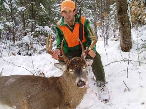 Whitetail deer hunting in Maine