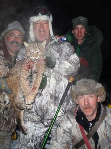 Grand Lake Stream Maine guided bobcat hunts