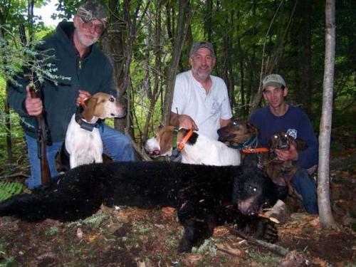 Blackbear hunting Maine