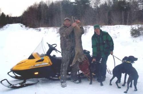 Bobcat hunting in Maine