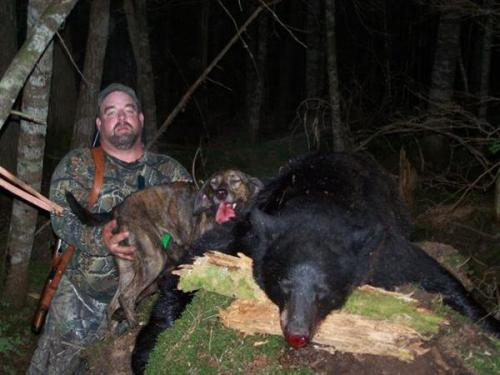 Blackbear hunting in Maine