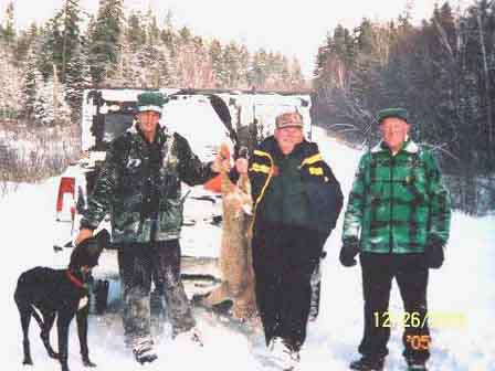 Bobcat hunts Maine