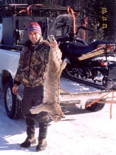 Maine guided bobcat hunting with hounds