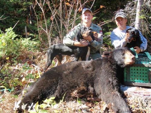 Bear guide service Maine