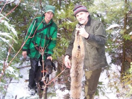 Bobcat hunt in Maine