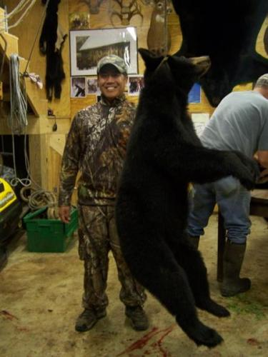 Guided bear hunting Maine