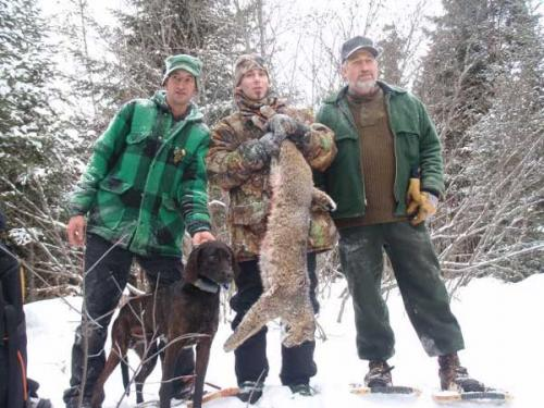 Maine bobcat hunt with hounds