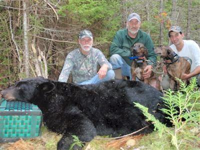 Black bear hunts with hounds in Maine