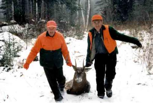 Whitetail deer hunt in Maine