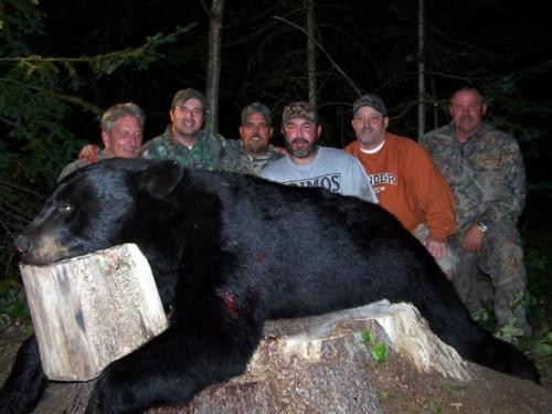 Guided blackbear hunts in Maine