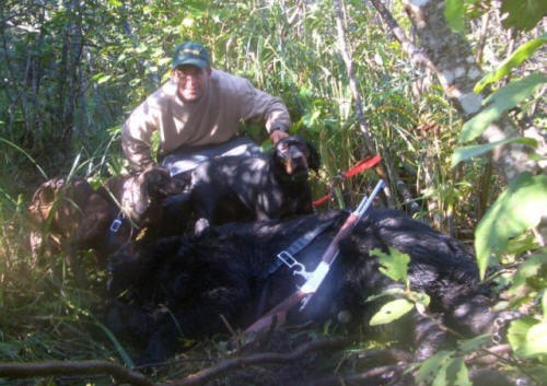 Maine blackbear guided hunting