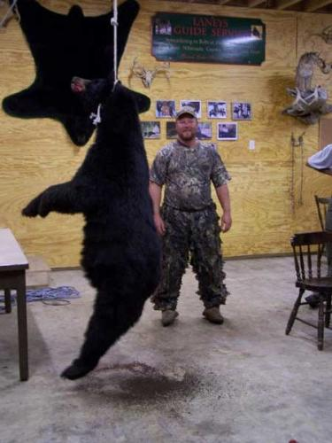 Blackbear hunts in Maine