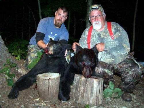 Guided blackbear hunts in Maine