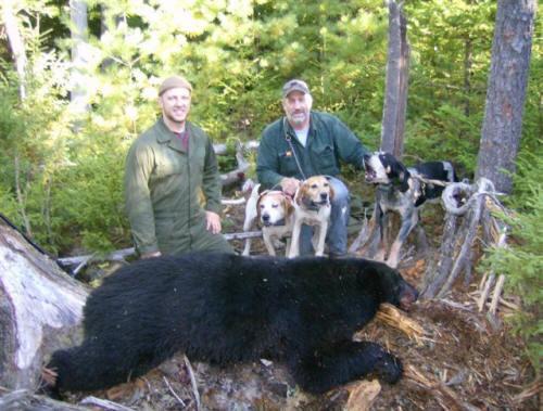 Trophy blackbear hunting in Maine