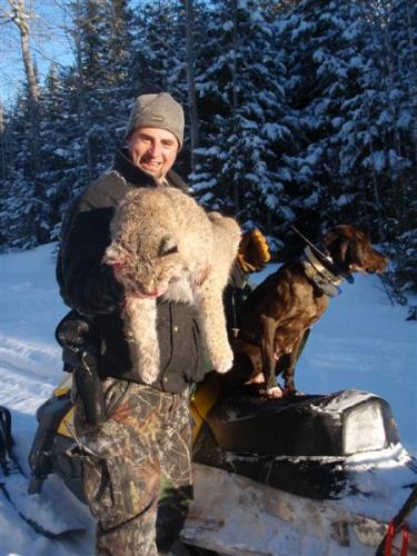 Maine bobcat hunts